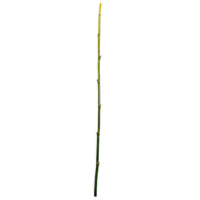 48 Inch Green Bamboo Stick