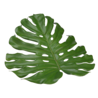 18 Inch Monstera Placemat