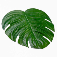 18 Inch W x 16.5 Inch L Monstera Placemat