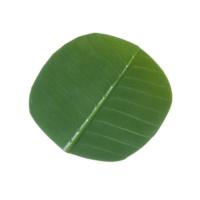 4.75 Inch Banana Leaf Coaster (6 ea/poly bag)