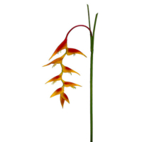 48 Inch Heliconia Hanging Spray