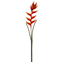 47 Inch Heliconia Hanging Spray
