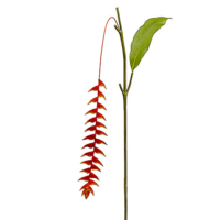 50 Inch Heliconia Hanging Spray