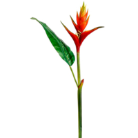 46 Inch Heliconia Spray