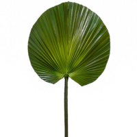 31 Inch Fan Palm Spray