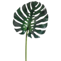 16 Inch Monstera Leaf