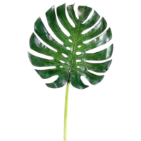 34 Inch Monstera Leaf
