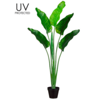 64 Inch UV Protected Plastic Bird of Paradise Plant in Pot