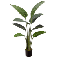 45 Inch Bird of Paradise Plant With 8 Leaves in Pot