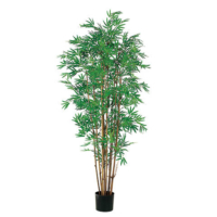 5 Foot Japanese Bamboo Tree x12 with 2400 Leaves in Pot