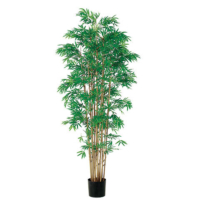 6 Foot Japanese Bamboo Tree x15 with 3360 Leaves in Pot