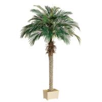 6' Phoenix Palm Tree in Rectangular Plastic Pot