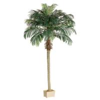 8' Phoenix Palm Tree in Rectangular Plastic Pot
