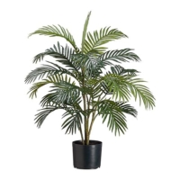 3 Foot Areca Palm Tree x4 in Plastic Pot