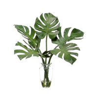 Monstera Arrangements