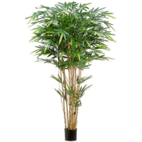 6 Foot Tropical Bamboo Tree x12 w/1664 Leaves in Pot