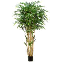 7 Foot Tropical Bamboo Tree with 1984 Leaves in Pot