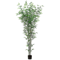 7 Foot Bamboo Tree x7 in Pot