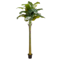 98 Inch Banana Tree With 15 Leaves in Pot
