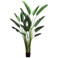 93 Inch Bird of Paradise Plant with 18 Leaves in Plastic Pot