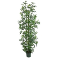 8 Foot Bamboo Tree x11 w/1746 Leaves in Pot