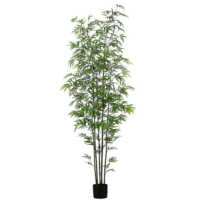7 Foot Mini Stem Bamboo Tree in Pot