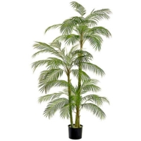 76 Inch Areca Palm Tree in Plastic Pot