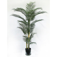 6 Foot Areca Palm Tree in Plastic Pot