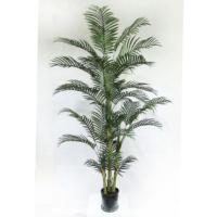 7 Foot Areca Palm Tree in Plastic Pot