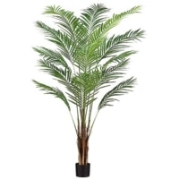 6 Foot Areca Palm Tree x15 With 567 Leaves in Plastic Pot