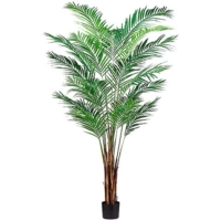 7 Foot Areca Palm Tree x19 with 739 Leaves in Plastic Pot
