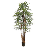 6.8 Foot Rhapis Palm Tree x10 in Pot