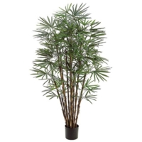 7 Foot Honey Lady Palm Tree x17 with 1062 Leaves in Pot
