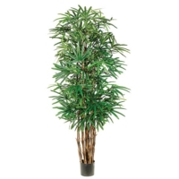 7.5 Foot Lady Palm Tree x7 with 1003 Leaves in Pot