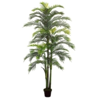 8.1 Foot Areca Palm x3 with 44 Leaves in Pot