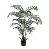 6 Foot Areca Palm Tree x18 in Plastic Pot