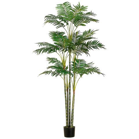 6 Foot Areca Palm Tree x26 in Plastic Pot