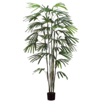 6 Foot Rhapis Palm Tree x6 w/348 Leaves in Pot