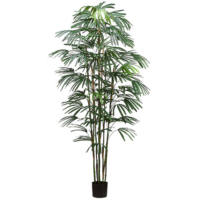 8 Foot Rhapis Palm Tree x9 in Pot