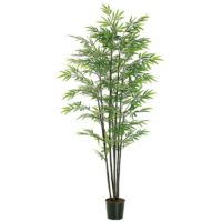 6 Foot Black Bamboo Tree x7 With 1440 Leaves in Plastic Pot