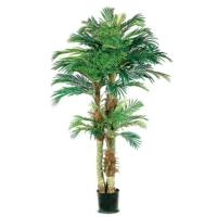 6' Phoenix Palm Tree in Round Pot