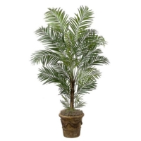7 Foot Deluxe Areca Palm Tree