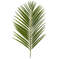 Areca Palm Branches