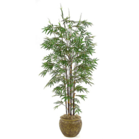 7 Foot Black Bamboo Palm Tree