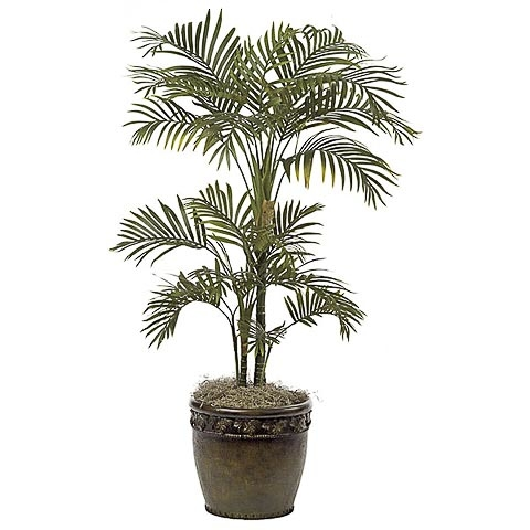 4 Foot Areca Palm Tree