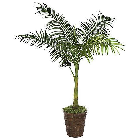 4 Foot Areca Palm Tree