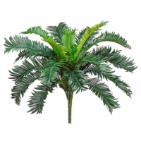 22 Inch Cycas Palm Bush x20