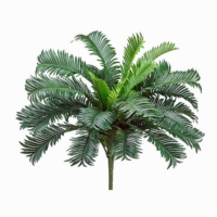 22 Inch Cycas Palm Bush x25