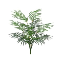 Areca Palm Bush & Plants