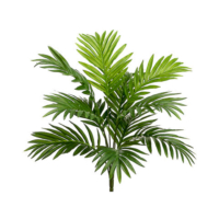 18 Inch Areca Palm Bush